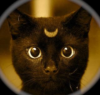 kitty-moon-large-msg-130098910191.jpg
