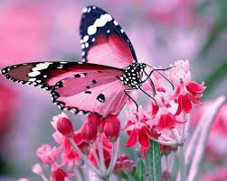 What Messages do Butterflies Have forus?