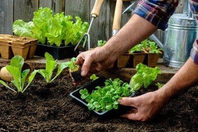 start-vegetable-garden-400x267