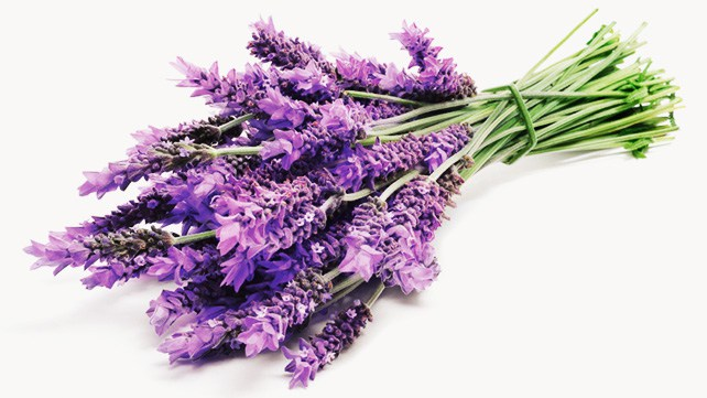 642x361_What_Lavender_Can_Do_for_You