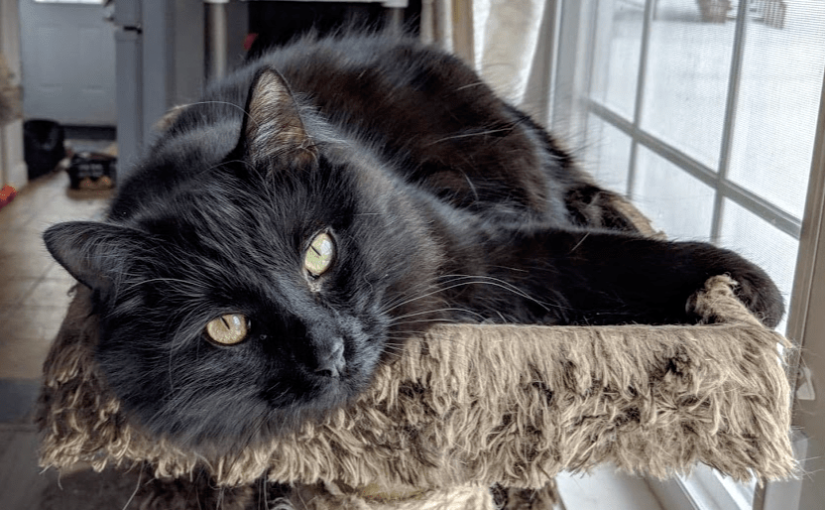 Why People think Black Cats are Bad Luck